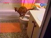 Toilet Trained Cat Shits